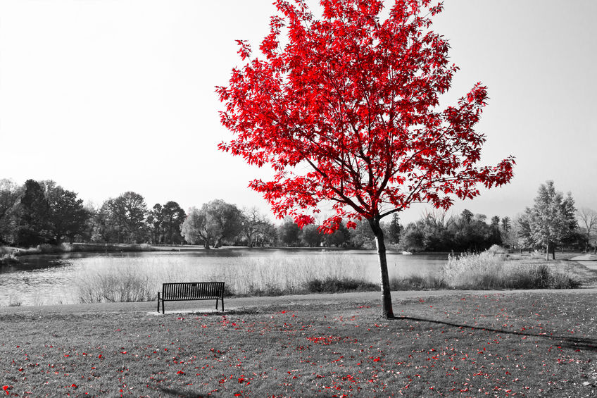red tree in a black and white park scene